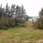 photos Firewood at TeWaiora and The Patch